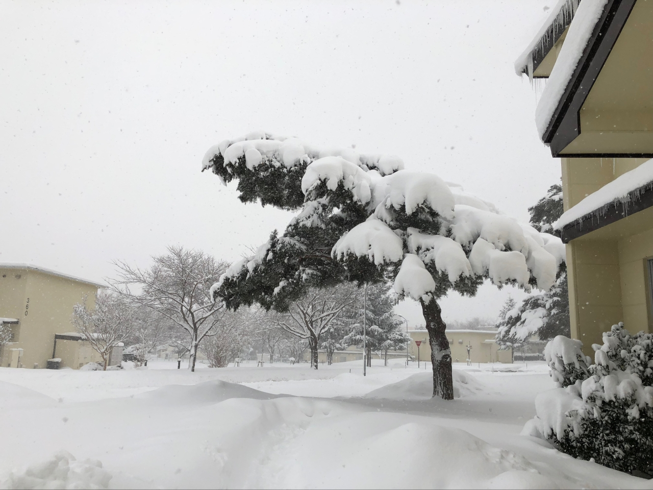 Heavy Snow in Tree