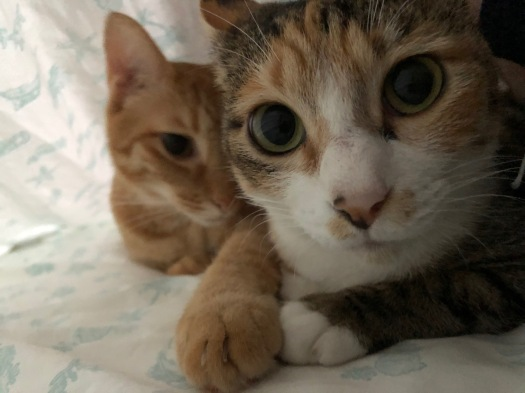 Tora and Sakura Up Close and Personal