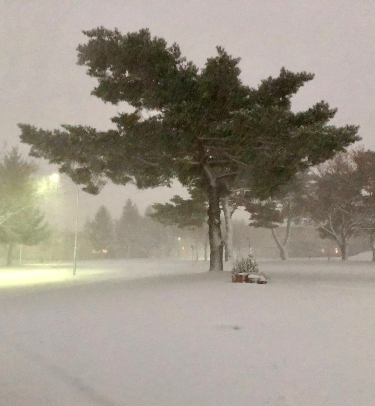 Snow Haiku 5